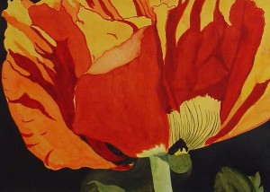 Poppy in Sunlight by Brenda Thomas, watercolor.