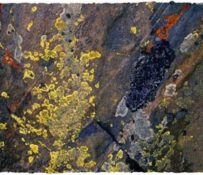 Lichens on the Mind: Photographs by Craig Denton